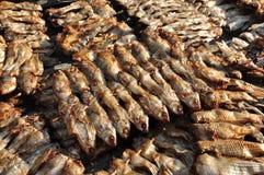 Pesci secchi Fotografia Stock Libera da Diritti