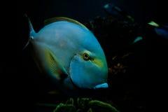 Pesci sotto il mare Fotografia Stock Libera da Diritti