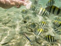 Pesci su fondale marino sabbioso Immagini Stock Libere da Diritti