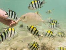 Pesci su fondale marino sabbioso Immagini Stock