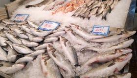 Pesci su ghiaccio fotografie stock libere da diritti