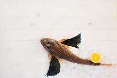 Pesci su ghiaccio Immagini Stock Libere da Diritti