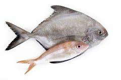 Pesci su priorità bassa bianca Immagine Stock