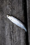 Pesci su un legno Immagine Stock Libera da Diritti