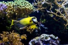 Pesci su una barriera corallina Immagine Stock