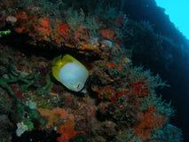 Pesci su una scogliera Fotografie Stock Libere da Diritti