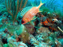 Pesci su una scogliera Fotografia Stock Libera da Diritti