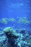Barriera corallina subacquea Fotografia Stock