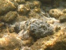 Pesci sul fondo dell'oceano Fotografia Stock Libera da Diritti