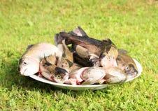 Pesci sul piatto Fotografia Stock