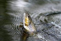 pesci sull'amo Fotografia Stock