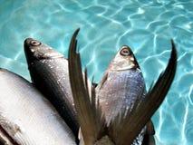 Pesci sulla vaschetta contro acqua Fotografia Stock Libera da Diritti