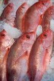 Pesci in supermercato immagine stock