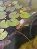 Pesci timidi Immagini Stock