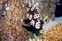 Pesci tropicali Fotografie Stock Libere da Diritti