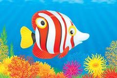 Pesci tropicali Immagini Stock Libere da Diritti