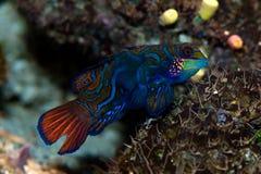 Pesci tropicali immagini stock
