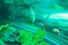 Pesci tropicali al tunnel acquatico nell'acquario di Rayong fotografia stock libera da diritti