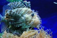 Pesci tropicali contro i polyps chiari Fotografia Stock Libera da Diritti