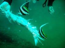 Pesci tropicali d'alimentazione   Immagini Stock