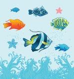 Pesci tropicali. Insieme di Vecror. Illustrazione Vettoriale