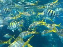 Pesci tropicali su una scogliera immagini stock