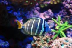 Pesci-un Fotografia Stock Libera da Diritti