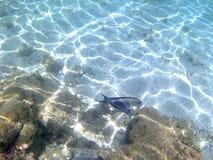 Pesci in un mare Immagine Stock