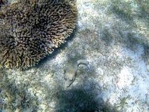 Pesci in un mare Fotografia Stock Libera da Diritti