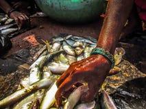 pesci in un mercato Immagini Stock Libere da Diritti