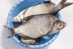 Pesci in una ciotola Fotografia Stock