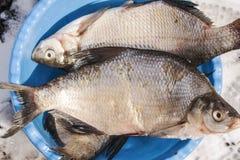 Pesci in una ciotola Immagini Stock