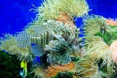 Pesci variopinti Fotografia Stock