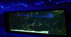 Pesci variopinti in acquario stock footage