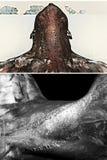 Pescoço muscular do ` s dos homens Fotografia de Stock Royalty Free
