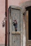 Pescocostanzo stara grodzka ulica zdjęcie royalty free