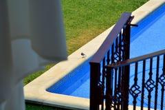 Peso da Regua, Portugal  - pool and birdie in hotel Stock Images