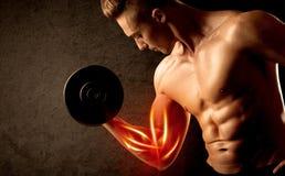 Peso de elevación del culturista apto con concepto rojo del músculo Foto de archivo