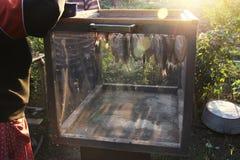 Pesque a barata, forçar é secado após a conservação em vinagre e embeber Caixa especial para a proteção contra insetos das moscas imagens de stock royalty free