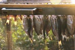 Pesque a barata, forçar é secado após a conservação em vinagre e embeber Caixa especial para a proteção contra insetos das moscas imagens de stock