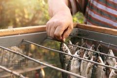 Pesque a barata, forçar é secado após a conservação em vinagre e embeber Caixa especial para a proteção contra insetos das moscas fotos de stock royalty free
