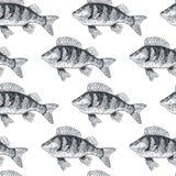 Pesque a carpa crucian, vista preto e branco, lateral isolada Imagem de Stock Royalty Free