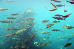 Pesque circundando, parque atlântico do mar, Noruega imagem de stock