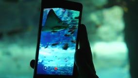 Pesque el acuario, hombre con el vídeo de los lanzamientos del teléfono móvil de los pescados de la natación en el tanque subacuá almacen de video