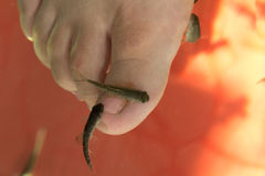 Pesque el tratamiento del cuidado de piel del pedicure de los pies del balneario con th Fotografía de archivo
