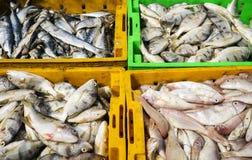 Pesque en bandeja plástica en el mercado de pescados largo de Hai Fotos de archivo