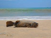 Pesque en la orilla, pescado en la arena, escalas de pescados imagen de archivo