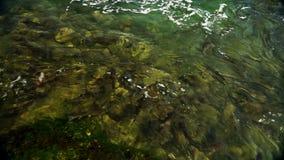Pesque en las aguas del río el Rin cerca del Rhine Falls Rheinfall en Suiza, uno del más grande de Europa metrajes