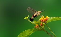 Pesque la abeja Imagenes de archivo