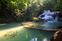 Pesque la cascada, roca, árbol, agua Imagenes de archivo